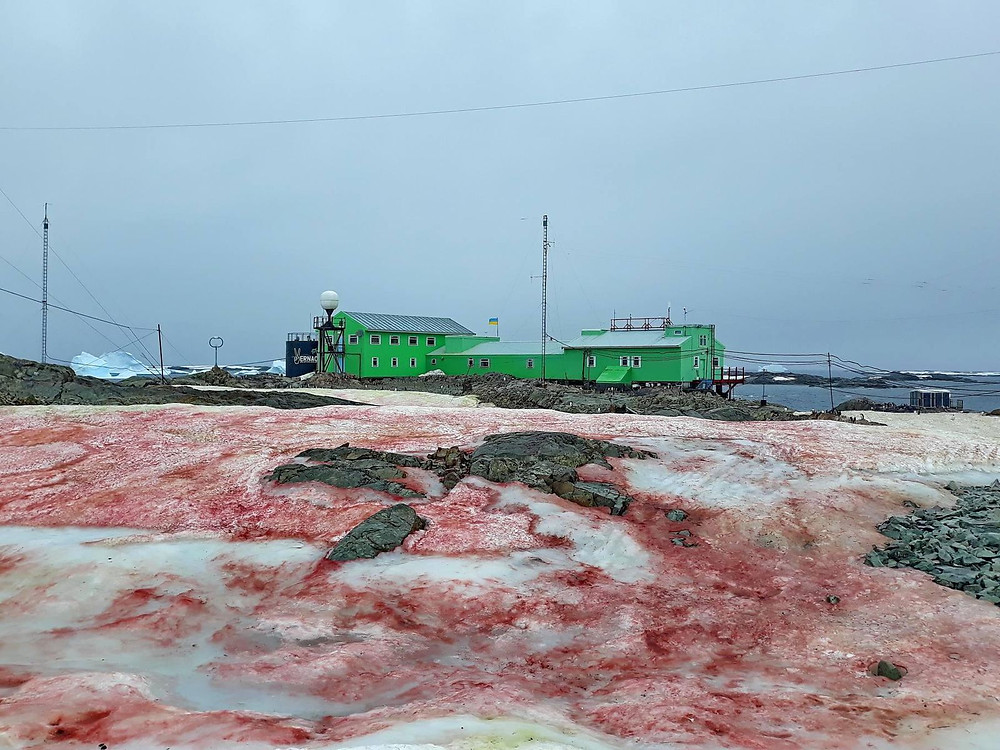 blood snow, Antarctica,