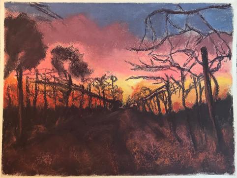 Sunset Vineyard I