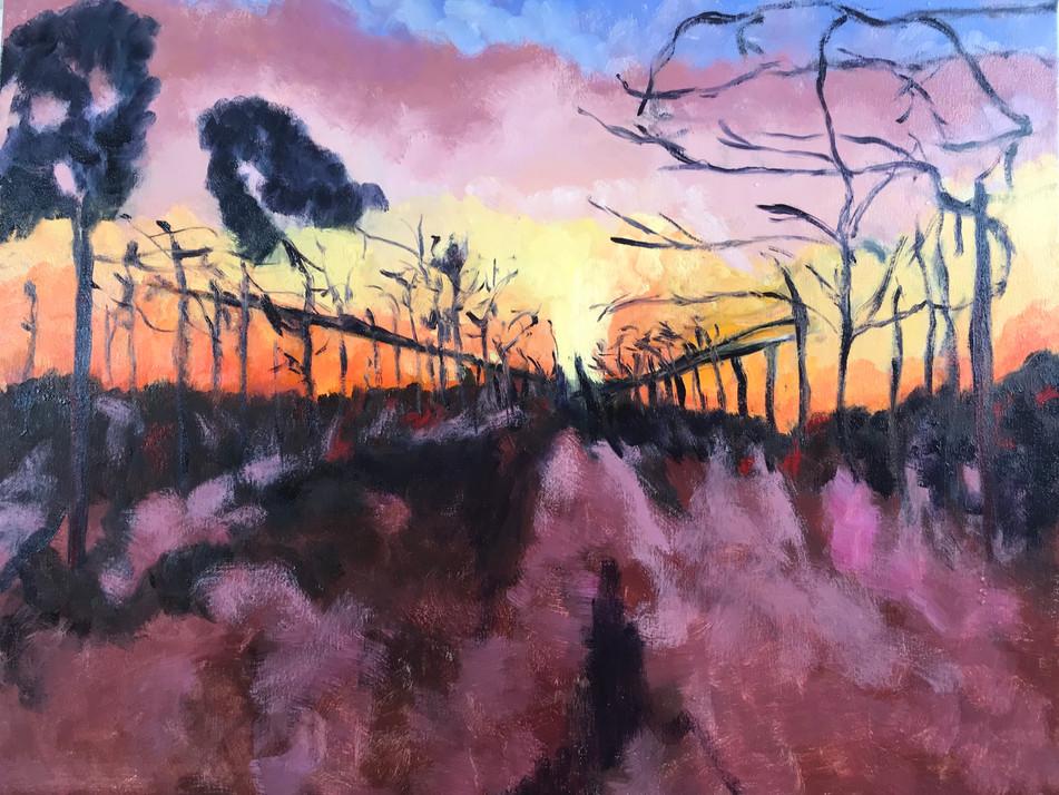 Sunset Vineyard II