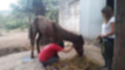 Horse Shelter (13).jpg