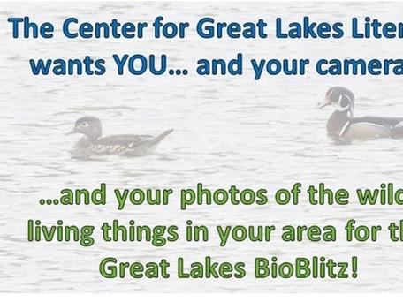 Great Lakes BioBlitz