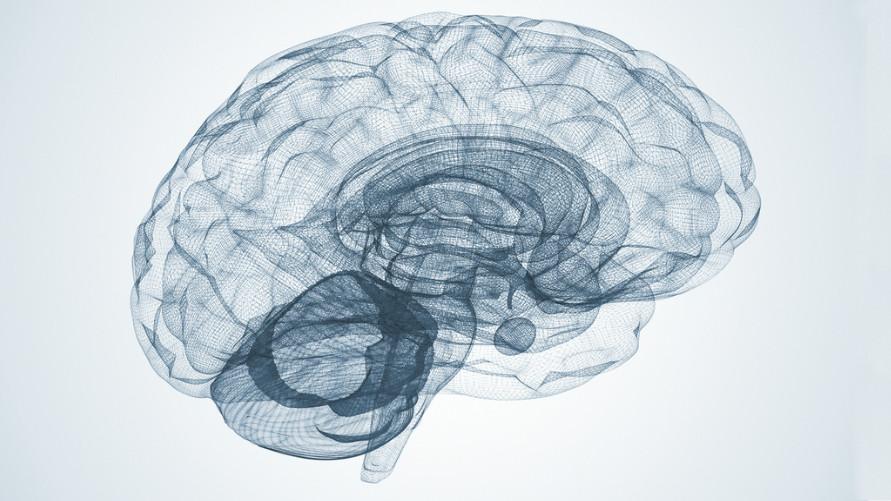Brachial Girl - neuroplasticity