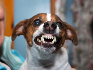Quali sono i sintomi della rabbia canina?