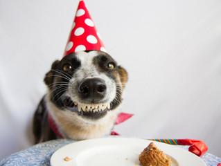 Torta di compleanno alla banana per il tuo cane