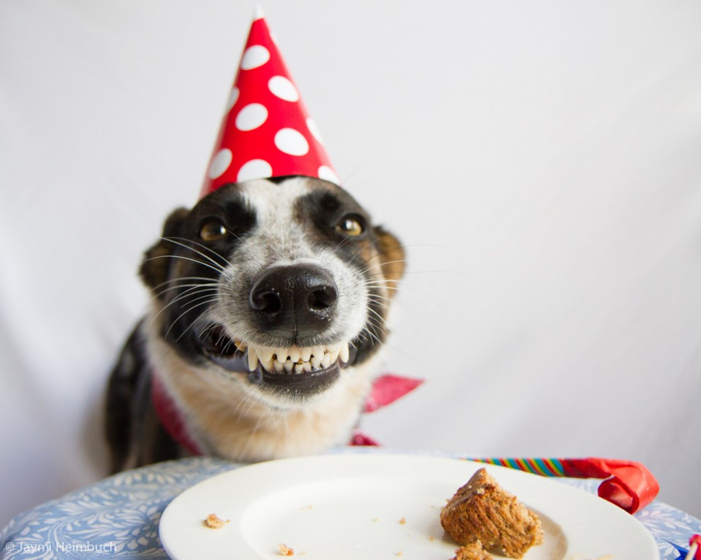dog-birthday-cake2.jpg