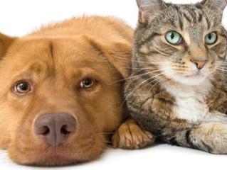 Come combattere l'artrosi dei vostri animali