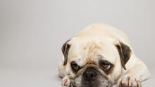 Come capire se il tuo cane ha un dolore acuto o cronico