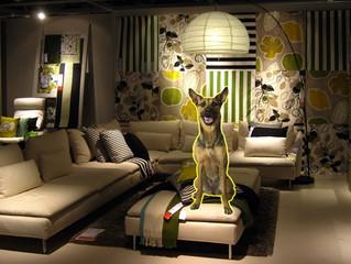 Soluzioni per la casa? Un cane...Da IKEA è possibile!