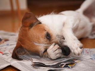 I parassiti del cane: quali sono?