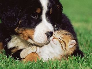 Arrivano i test per le allergie anche per cani e gatti