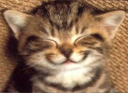Le regole per un gatto felice