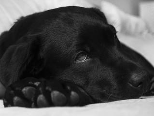L'antiparassitario va usato anche per i cani che vivono in casa?