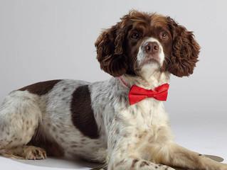 5 Regole per trasformare il tuo cane in un modello