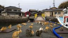 Giappone, l'isola Aoshima: il paradiso degli amanti dei gatti