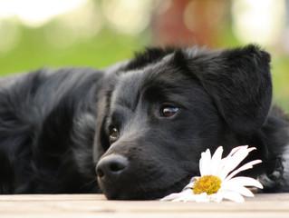 Arriva il corso per diventare Operatore in Pet Therapy