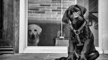 I cani soffrono di gelosia?