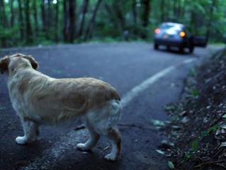 Emergenza Quattrozampe: Non abbandonate i vostri animali