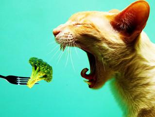 Ricetta per Gatti: Delizia di Uova e Formaggio