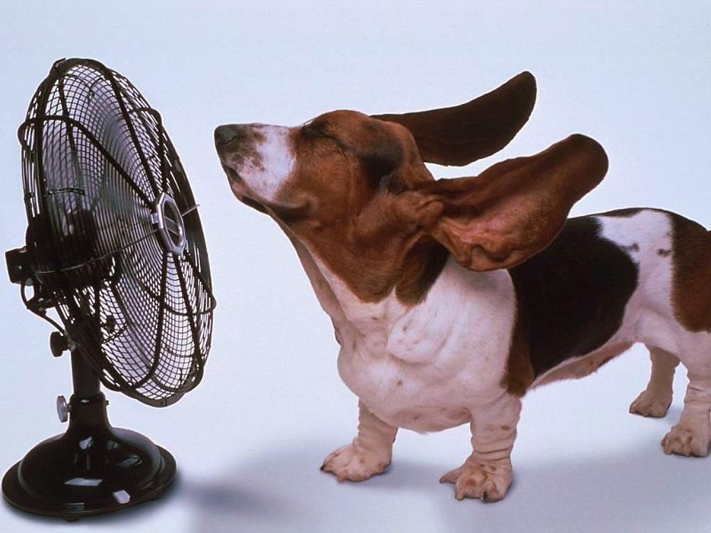 basset-hound-con-ventilatore.jpg
