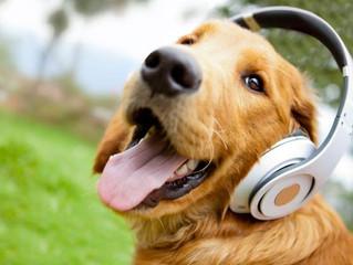 I cani amano la musica classica
