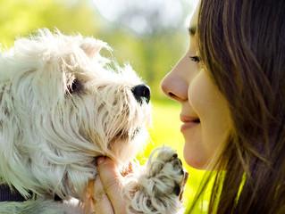I cani ci guardano con gli occhi dell'amore
