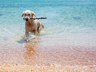 Vacanze su misura per cani e gatti in Sardegna