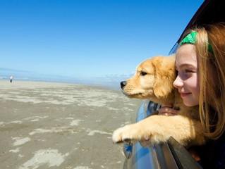 Viaggiare con il vostro cane: Vademecum per l'estate