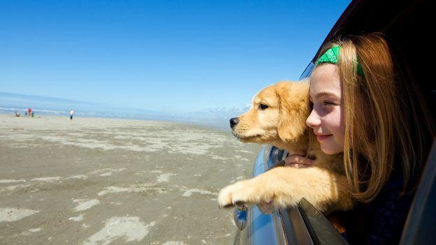 viaggiare sereni con il proprio pet.jpg