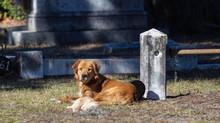 Cane veglia il cucciolo morto in un cimitero