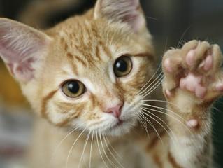 Le curiosità sui nostri gatti