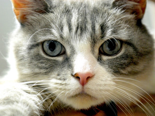 Quali sono le malattie più pericolose per un gatto?