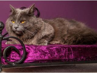 Meadow Cat Hotel: Tutto il lusso per Gatti