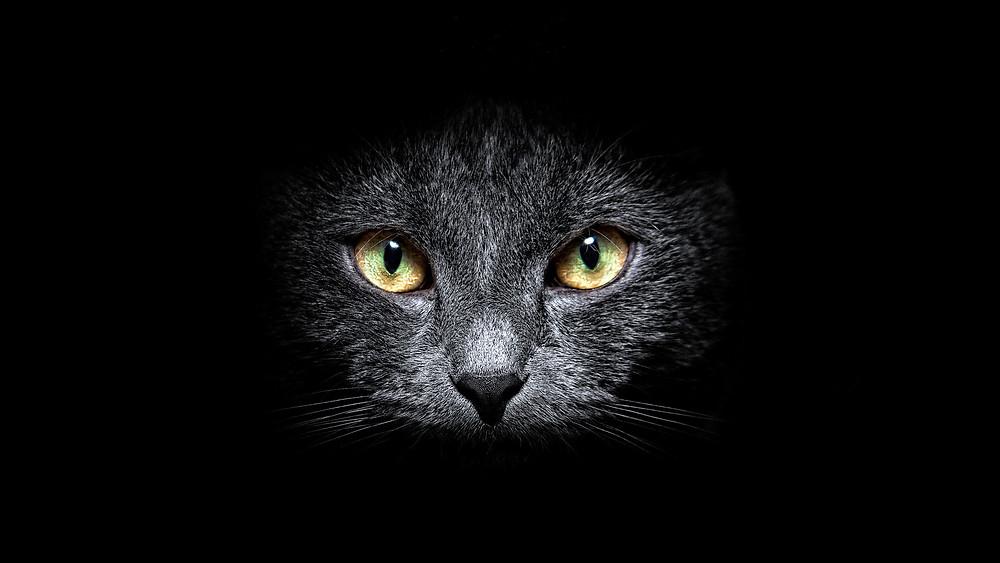 gattoNeroMuso.jpg