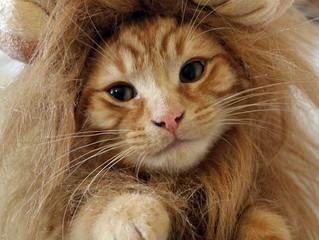 Tira fuori il leone che c'è in te!