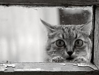 Gatto in casa o Gatto libero? Quali sono i pro e i contro?