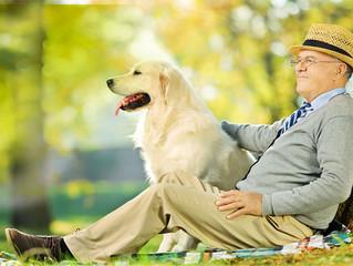 La pet therapy nelle case di riposo torinesi: spazzare via la solitudine a colpi di coda