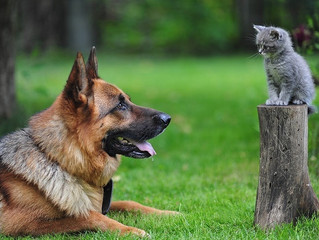 La vaccinazione nel cane e nel gatto: scopriamo di più