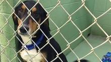 La trasformazione di un cane prima e dopo essere stato adottato