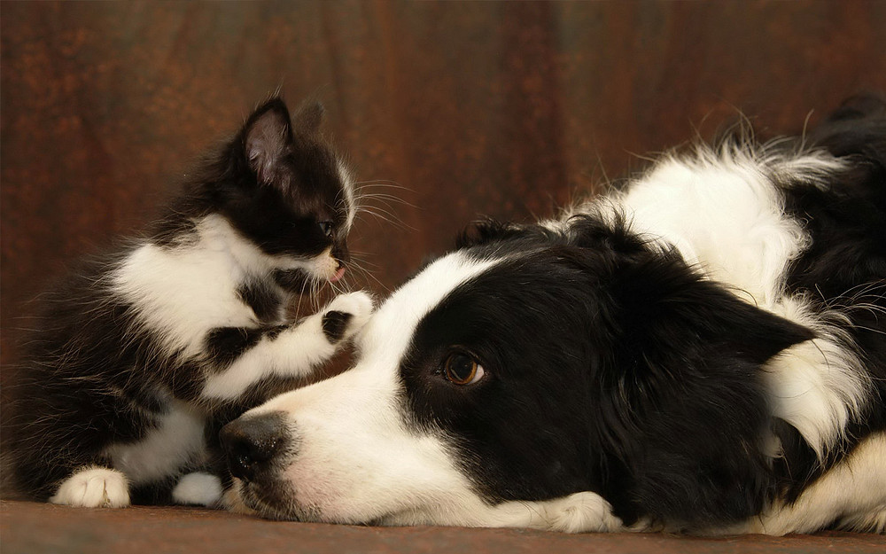 cane-e-gatto-amicizia.jpg