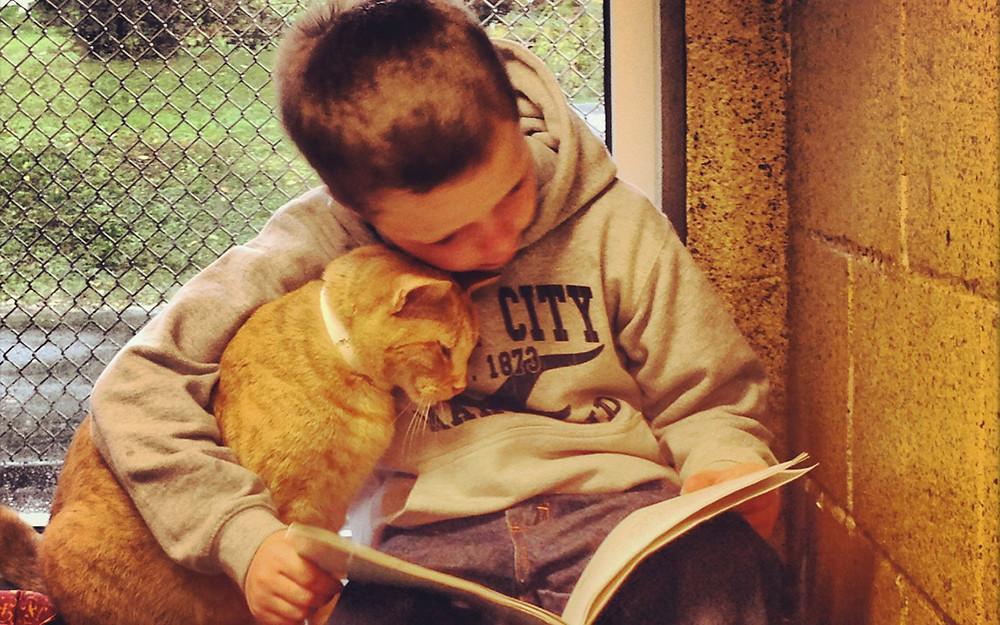 Pet-therapy-lettura-gatti-in-Pennyslavia.jpg