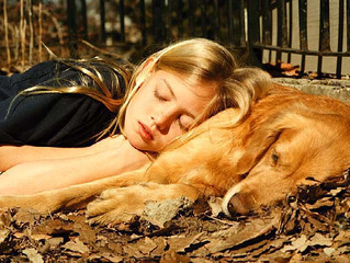 Alimen-tiamo-ci con amore: il progetto di Pet Therapy contro l'anoressia