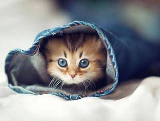 17 febbraio giornata del gatto: perché proprio questa data?