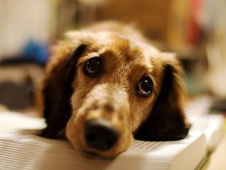 Malattie infettive nel cane: quali sono le più pericolose?
