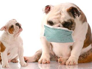 L'Adenovirus: un nemico da non sottovalutare!