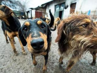 Niente tassa sui cani non sterilizzati
