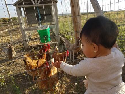 Why do we have a hobby farm