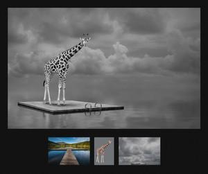 TAPPA_21_08_48646_2_---- Adrift.jpg
