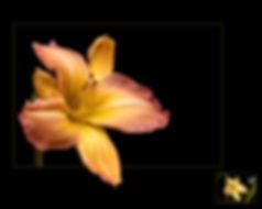 TAPPA_21_09_48097_2_---- Effects of Natu