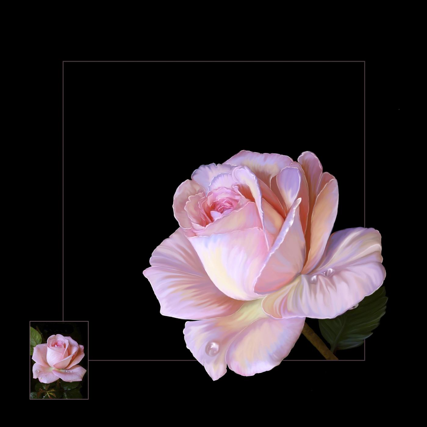 TAPPA_21_02_48096_2_---- My Pastel Rose.
