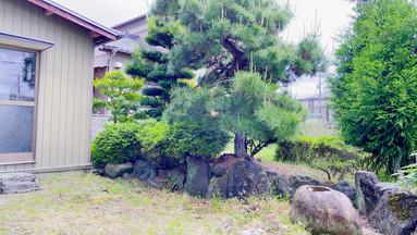 この木の向こう側も広い